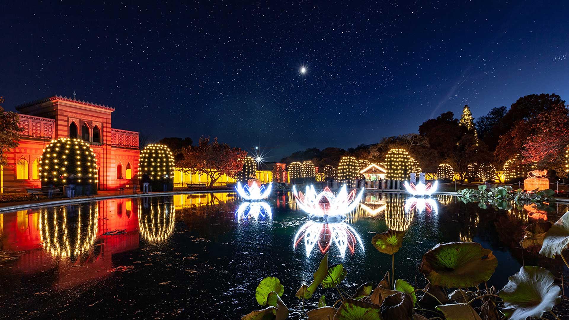 Christmas Garden 2021